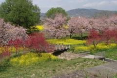 春になれば、こんな景色も